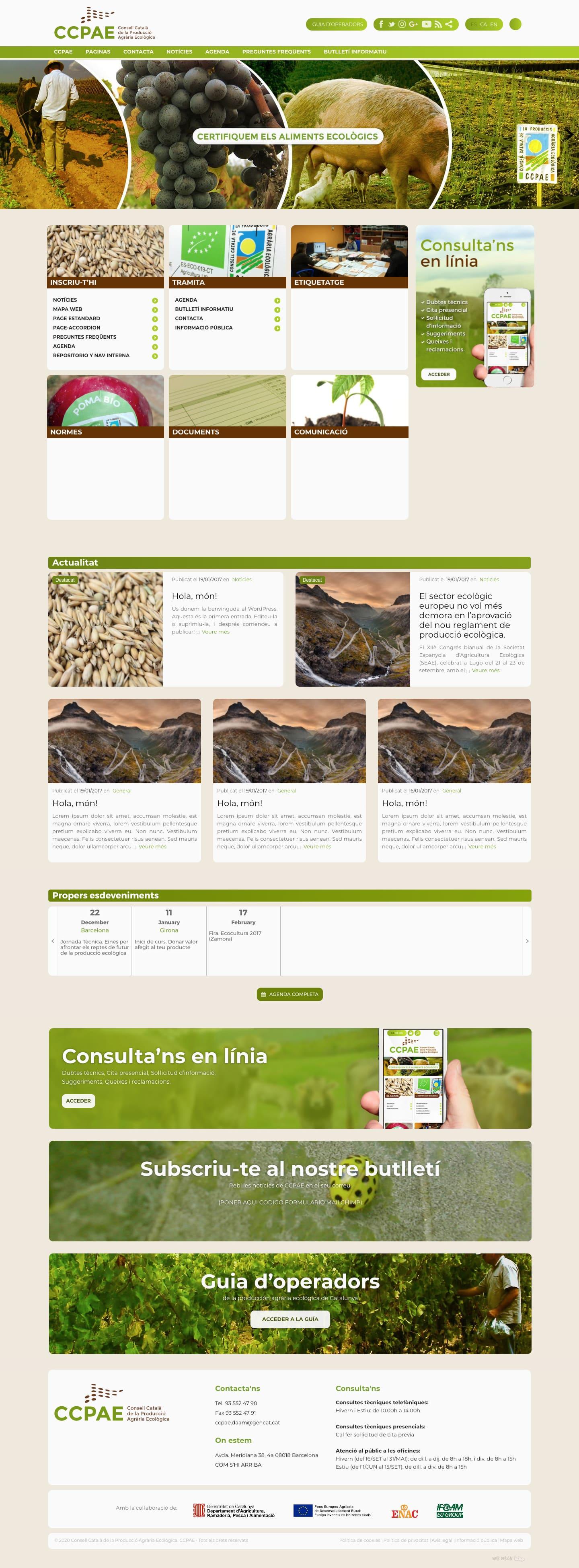 diseño web CCPAE